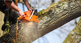 Tree Surgery Medway Gravesend Sheppey Kent